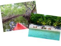 COMBO: Mangroves and South Shore Snorkeling and Swimming
