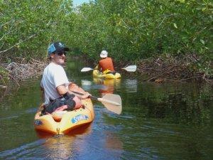 Mangrove Kayaking in Utila