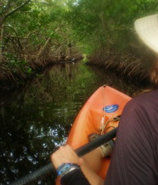 Exploring the Mangroves Channels of Utila
