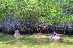 Mangrove Snorkel 3