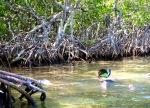 Mangrove snorkle 1
